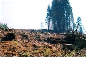 SFI clearcuts 2006